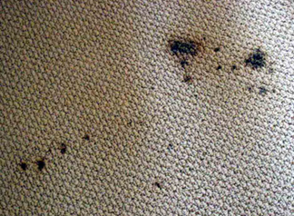 Spot & Stain Removal San Leandro, CA